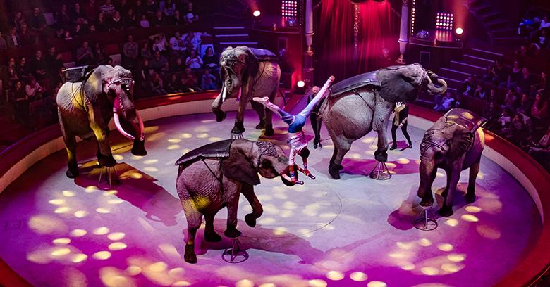 Programm3-Elefanten